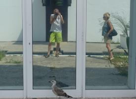 piccionart2